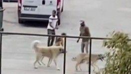 İstanbul'da köpekleri acımasızca kavga ettirdiler