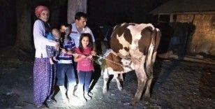 Çalınan inekler sahiplerine jandarma operasyonuyla kavuştu