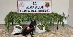 Kozan'da uyuşturucu operasyonu