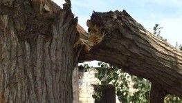 Siverek'te fırtına ağaçları kökünden söktü