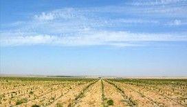 Özbekistan'ın yeni meyve bahçelerinin kurulumu Türk uzmanlara emanet