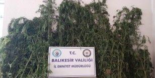 Gönen'de polis değeri 60 bin TL olan 588 kök kenevir ele geçirdi
