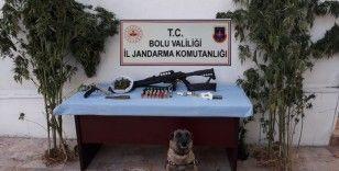 Bolu'da, kenevir yetiştirilen eve operasyon: 2 gözaltı