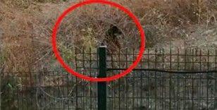 İstanbul'un göbeğinde boz ayı görüntülendi