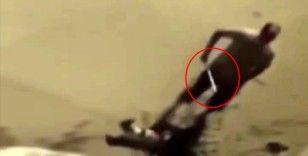 Elindeki boruyla köpeği acımasızca döven şahıs gözaltına alındı
