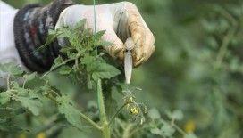 Türkiye'nin 2023'teki 'sertifikalı tohum' ihracatı hedefi 320 milyon dolar