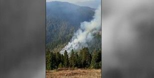 Gümüşhane Örümcek Ormanları'nda yangın