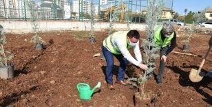 Yeşil Bağlar için fidanlar toprakla buluşturuldu
