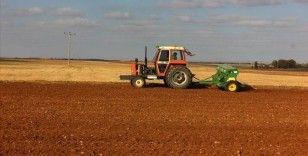 Pandemi sürecinde değerlenen buğdaya ilgi arttı