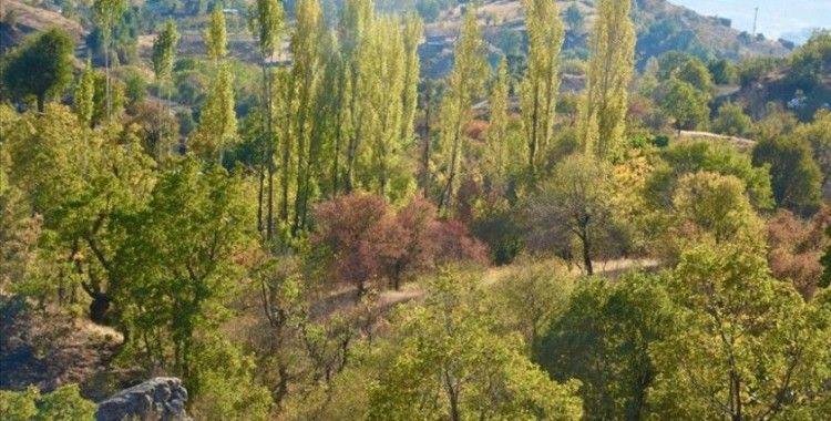 Huzura kavuşan Namazdağı bölgesinde sonbahar güzelliği