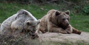 71 ayıyı kış uykusu tutmadı