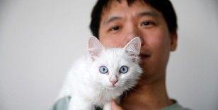 Van kedisini sahiplenmek için Çin'den Türkiye'ye geldi