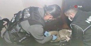 Avcılar'da yaklaşık 90 kilo skunk ele geçirildi