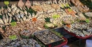Balıkçılar hamsinin neslinin tükenmemesi için çağrıda bulundu