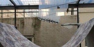 Cam silerken 3. kattan düşen kızı ölümden, kurumaya bırakılan halı kurtardı