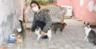 Üniversite sınavına hazırlanırken 50 kedi ve 15 köpeğe sahip çıktı