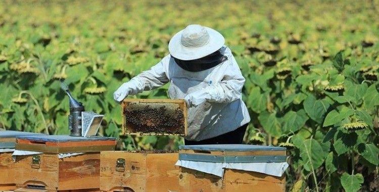 Arıcılık, ipek böcekçiliği, kaz ve hindi yetiştiriciliğine hibe desteğine başvuru için son gün 22 Ocak