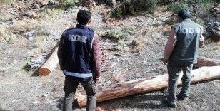 Orman'da 2 milyon liralık vurgun operasyonu