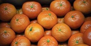 Doğu Akdeniz turunçgil ihracatında zirvede