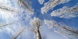 Doğu Anadolu'da kar yağışı, buzlanma ve don olayı bekleniyor