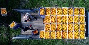 Turunçgillerde ihracat artışı için 'üretim sezonunun uzatılması' önerisi