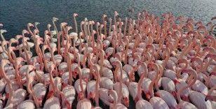 İstanbul Boğazı'nda kuş türü arttı