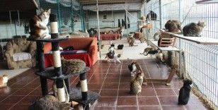 Tam 250 kediye ev sahipliği yapıyor
