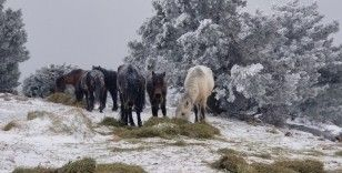 Eksi 8 derecede Spil Dağı'nda yaban hayatı unutulmadı