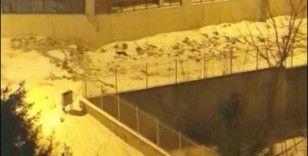 Tekirdağ'da aç kalan tilkiler şehre indi