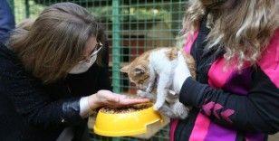 Gaziantep'te sokak hayvanları için iş birliği