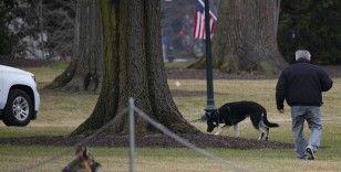 ABD Başkanı Biden'ın köpekleri Beyaz Saray'a veda ediyor