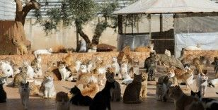 İdlib'deki hayvan barınağında savaştan kurtarılan kediler tedavi ediliyor