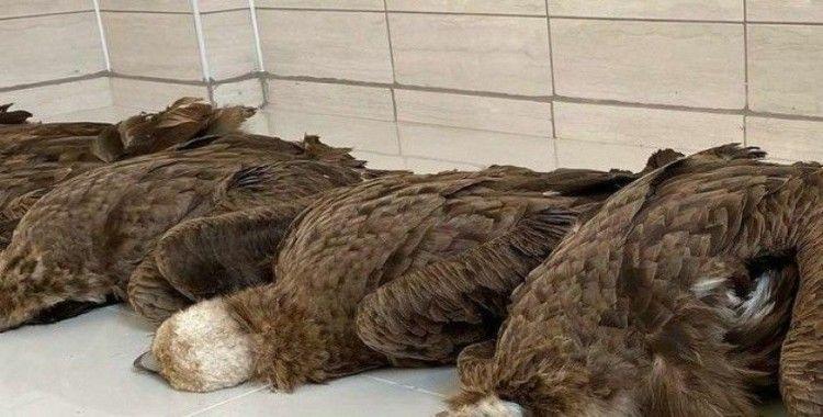 Afyon'da koruma altındaki 7 kara akbaba ölü bulundu: Çevreye atılan zehirli etleri yedikleri düşünülüyor