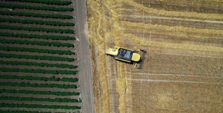 Tarım sektöründen tarihin en yüksek ilk çeyrek ihracatı