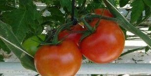 Rusya, Türkiye'den domates ithalat kotasını artırmaya hazırlanıyor