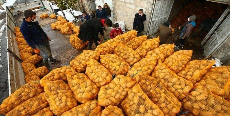 Cumhurbaşkanı Erdoğan'ın müjdesinin ardından depodaki patatesini TMO'ya satan Nevşehirli çiftçiler mutlu