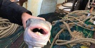 'Balon balığının üzerindeki parazitler ekonomik değere sahip balıklara sıçrarsa ciddi ölümlerle karşılaşabiliriz'