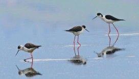 Göçmen kuşların tercihi Hersek Lagünü