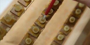 Arı sütü, poleni ve arı ekmeğinde katkı maddesi kullanılamayacak