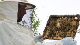 Bilinçsiz zirai ilaçlama toplu arı ölümlerine neden oluyor