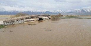 Yükselen su seviyesi inci kefali göçüne umut oldu