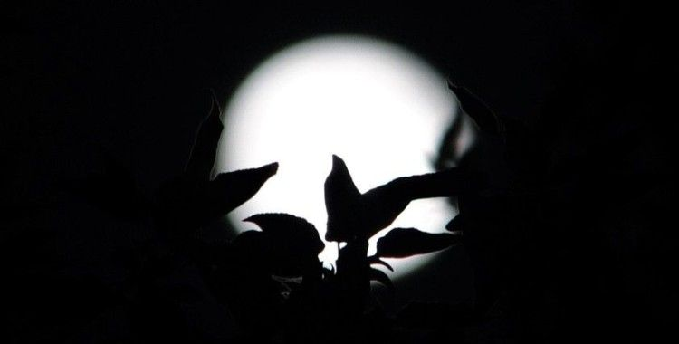 Van'da yılın ilk 'Süper Ay'ı kartpostallık görüntüler oluşturdu