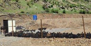Bakan Soylu: 'Bir zamanlar teröristlerin gezdiği Hanke Dağı'nda artık, tavuklar geziyor'