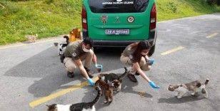 Adalar'daki sokak hayvanları kısıtlamada emin ellerde