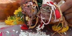 Hintliler yağmur için kurbağaları törenle evlendirdi