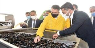 Tarım ve Orman Bakanı Pakdemirli'den kıyı balıkçılarına ödeme müjdesi