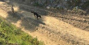 Bakıma muhtaç 17 köpeği ölüme terk eden belediyeye ceza
