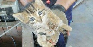 Havalandırma boşluğuna düşen yavru kediler annelerine kavuştu