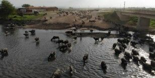 Serengeti Parkı değil Balıkesir Ovası