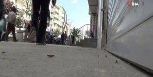 Hakkari'de sokaklarda görülen çekirgeler tedirgin ediyor